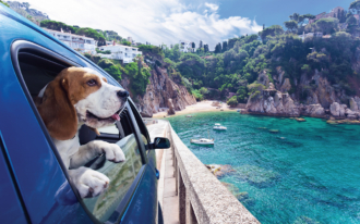 Five Tips to Take Pets on Trips