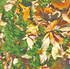 How Mulched Leaves Help Your Lawn