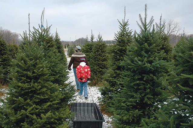 Christmas Tree Tips and Tricks