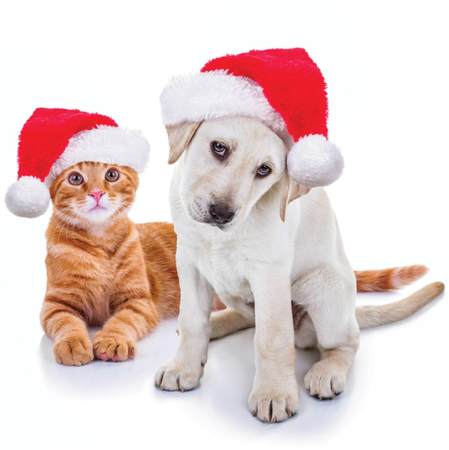 Holiday Gifts for Four-Legged Family Members