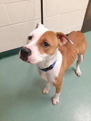 Adopt a Shelter Dog
