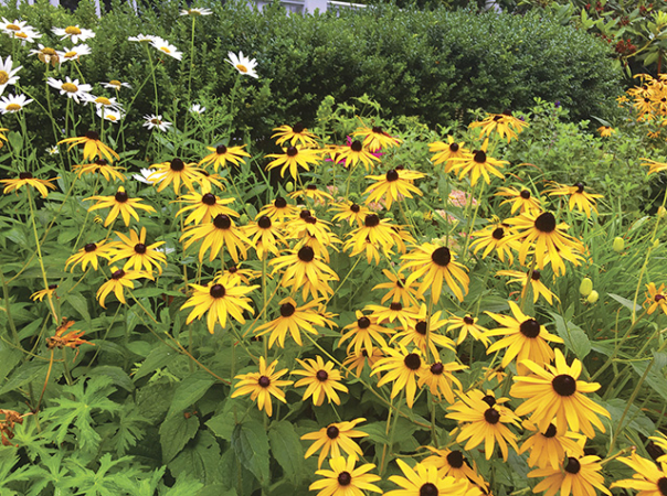 How to Care for Perennials