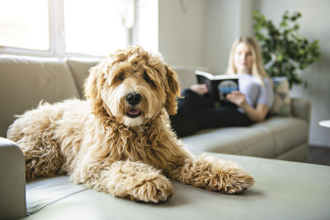 Montoursville Konkle Library Dog Days of Summer Used Book Sale